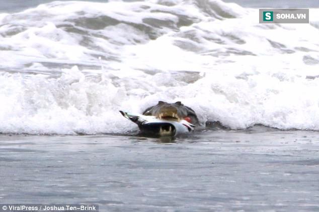 Chuyện lạ: Cá sấu đói ăn đâm làm liều, mò ra tận biển để săn thịt cá đuối - Ảnh 2.
