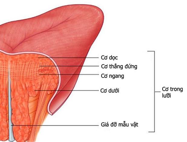 Hoa lưỡi 3 cánh và khả năng đặc biệt mà chỉ có 1% người trên thế giới có được - Ảnh 3.