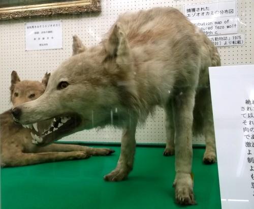 Đây là robot Quái vật Sói tại Nhật, mang trong mình linh hồn của loài sói Hokkaido đã bị tuyệt chủng xưa kia - Ảnh 2.