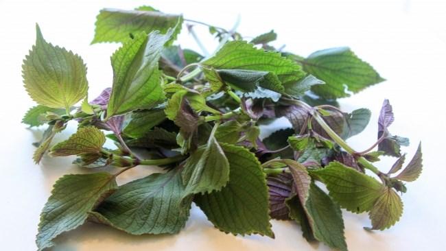 7 loại cây phổ biến vừa ăn vừa có tác dụng chữa bệnh - Ảnh 3.