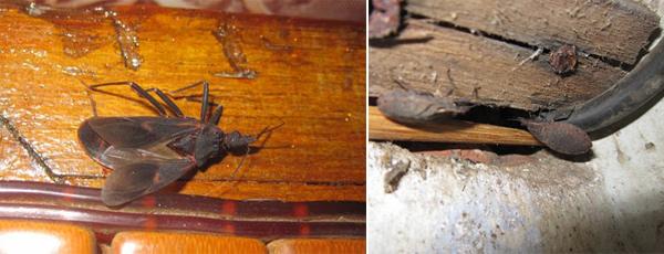 Lập tức dọn dẹp sạch nhà ngay nếu phát hiện những hạt nhỏ này trong nhà - Ảnh 3.