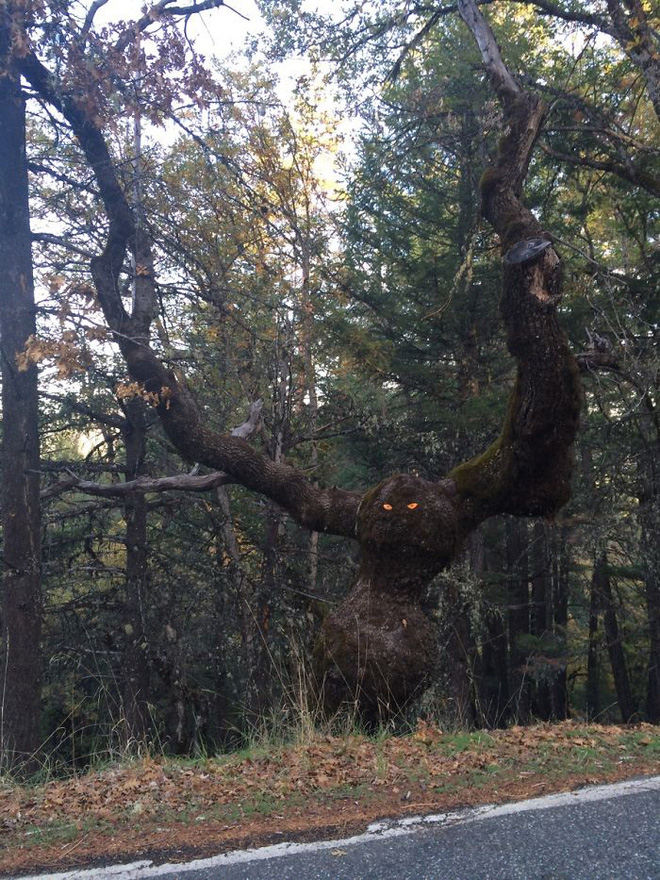 18 hình ảnh khiến bạn phải giật mình khi nhìn vào những cây cổ thụ - Ảnh 3.