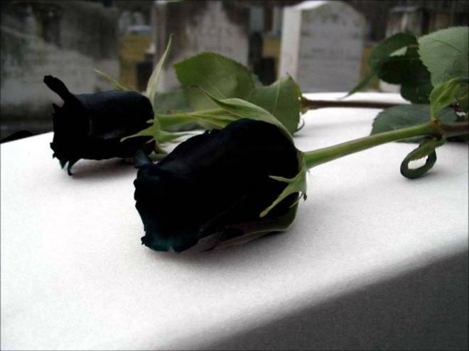 Xôn xao loài hoa hồng đen cực quý hiếm, chỉ trồng được ở duy nhất 1 ngôi làng - Ảnh 3.