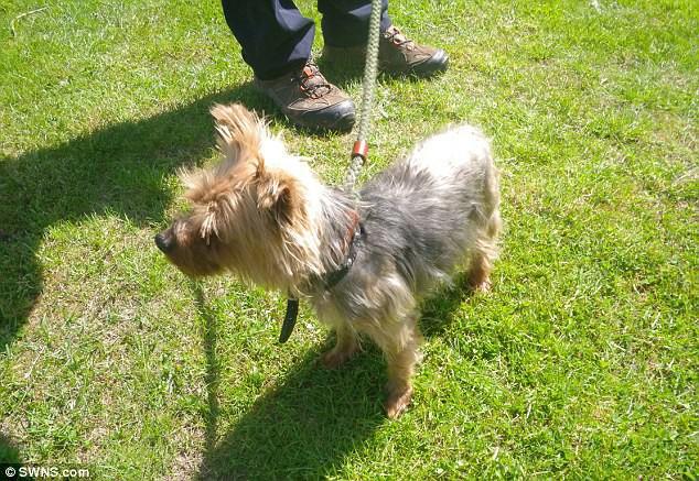 Chú chó không được xén lông suốt 13 năm, người chủ bị phạt cả đời không được nuôi động vật - Ảnh 3.