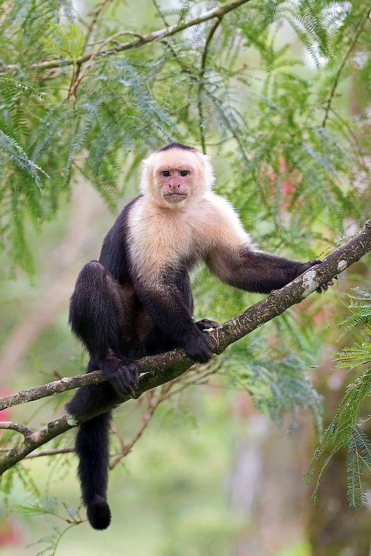 Câu chuyện phi thường của cô bé 5 tuổi bị bỏ rơi trong rừng, lớn lên cùng bầy khỉ trước khi tìm về với văn minh - Ảnh 3.