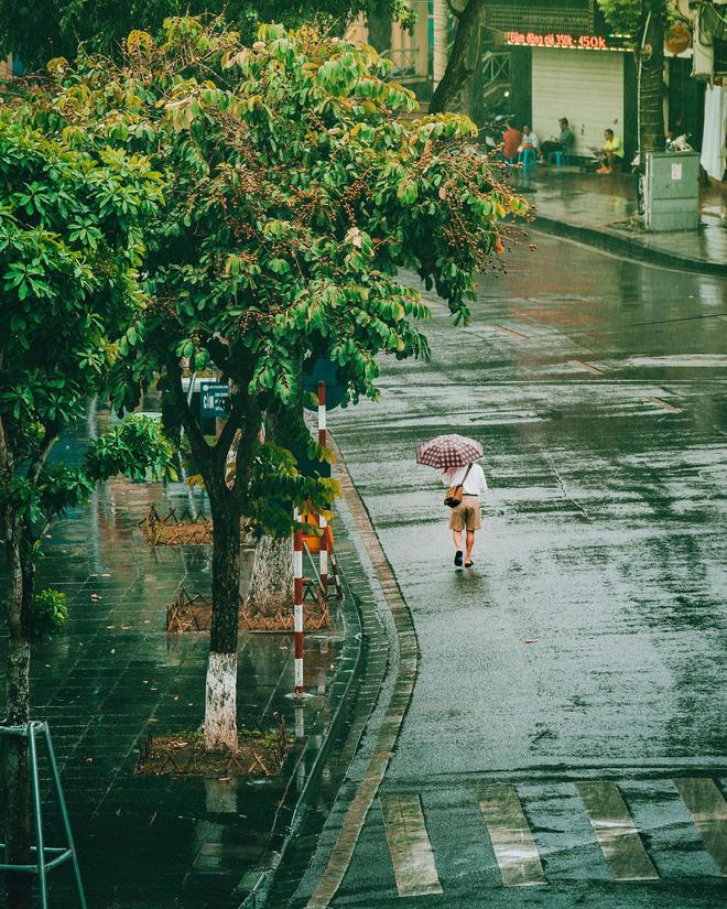 Những bức ảnh tuyệt đẹp này sẽ khiến bạn nhận ra, trong mưa, cuộc đời vẫn dịu dàng đến thế - Ảnh 22.