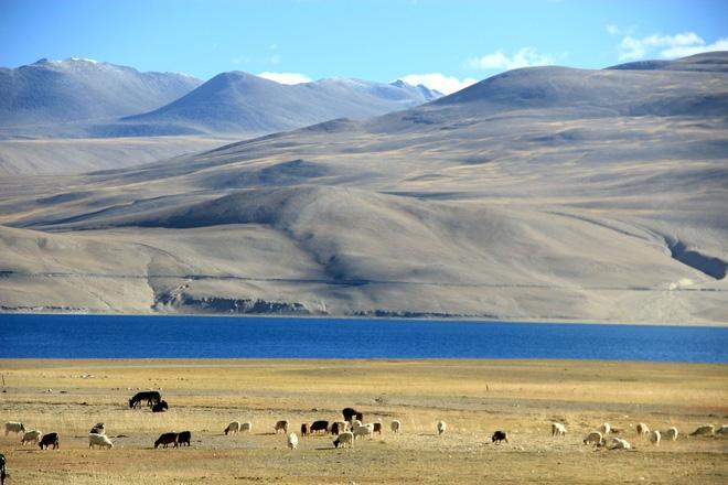"""Mùa thu ở Ladakh: Hành trình trải nghiệm của 1 phụ nữ Việt đến nơi đẹp tựa """"thiên đường ẩn giấu"""" ở Ấn Độ - Ảnh 23."""