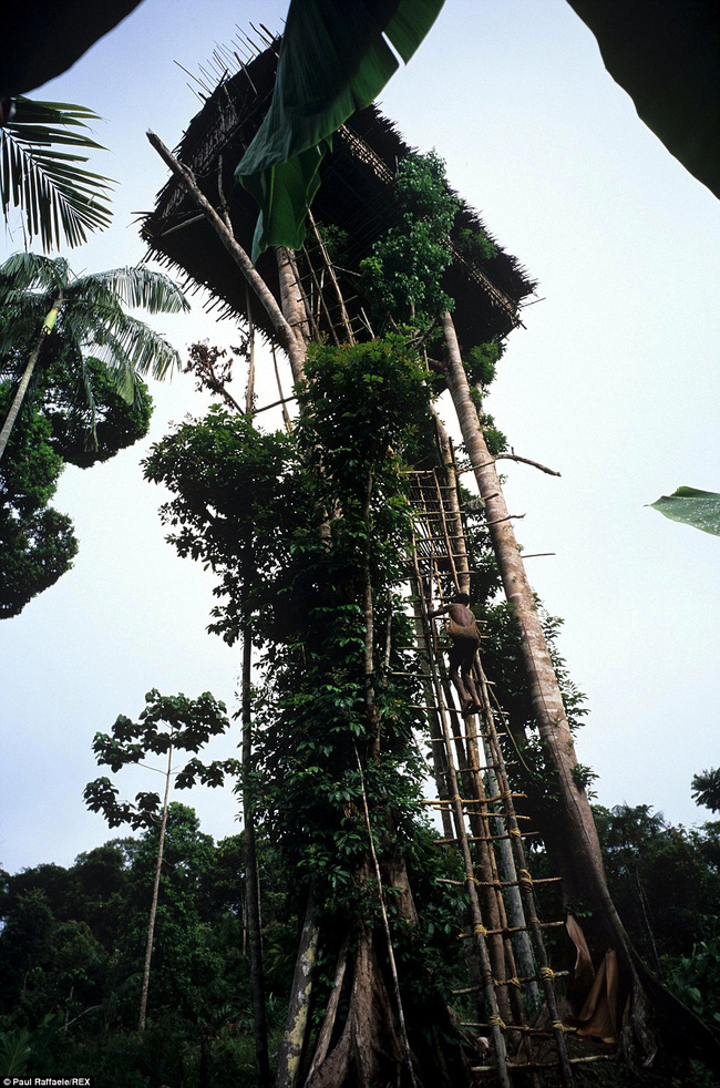 Sống trên những ngôi nhà cây cao tới 50m, bộ lạc bí ẩn khiến nhiều người khâm phục sức sống phi thường - Ảnh 4.