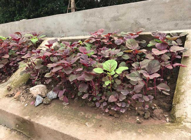 Khoét lỗ bê tông trồng rau: Hà thành sánh cùng Hà Giang - Ảnh 4.
