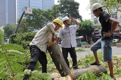 Bắt đầu đốn hạ hàng cây xanh trên đường Lê Lợi - Ảnh 3.