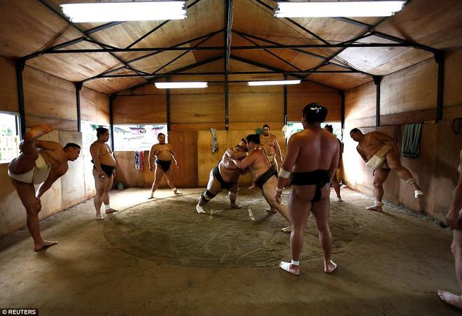Vén màn cuộc sống của các đấu sĩ sumo tinh nhuệ tại Nhật Bản: Nạp 8.000 calo/ngày, phải thở bằng máy oxy khi ngủ - Ảnh 4.