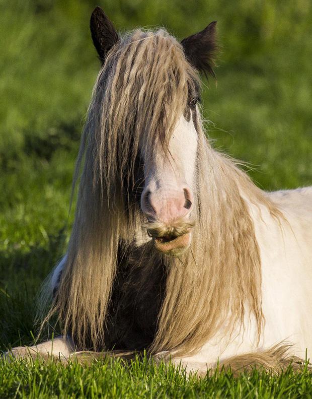 14 chú ngựa trông thật menly khi mọc râu - Ảnh 4.