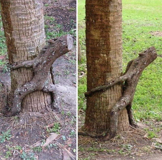 18 hình ảnh khiến bạn phải giật mình khi nhìn vào những cây cổ thụ - Ảnh 4.