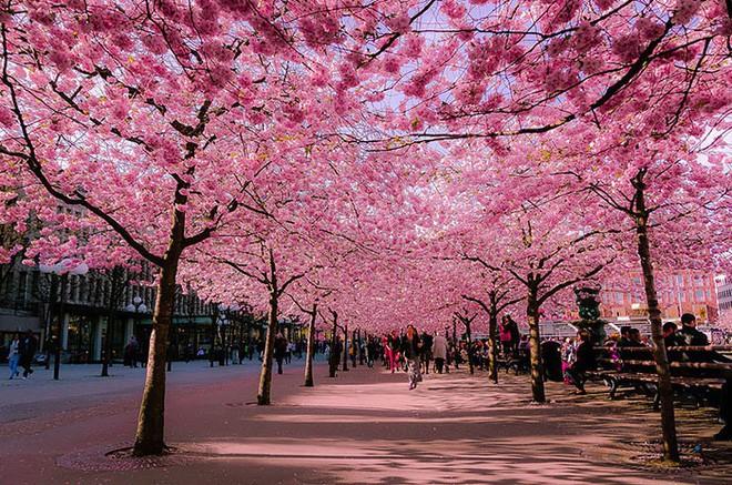 Những con đường phủ đầy hoa tươi như trong truyện cổ tích - Ảnh 4.