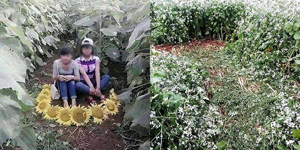 Ham chụp ảnh kiểu Hàm Hương, thanh niên thô bạo phi xe xuyên qua đàn bươm bướm - Ảnh 6.