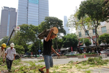Bắt đầu đốn hạ hàng cây xanh trên đường Lê Lợi - Ảnh 4.