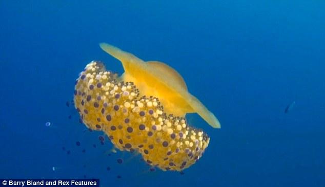 Thấy quả trứng chiên kỳ lạ trôi dưới lòng đại dương, nhiếp ảnh gia giật mình khi lại gần - Ảnh 5.
