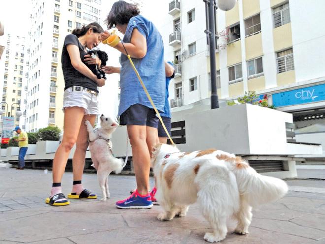 Phát điên vì hàng xóm hồn nhiên: Thả rông cho chó phóng uế nhờ, rác nhà mình gửi cổng nhà người khác - Ảnh 5.
