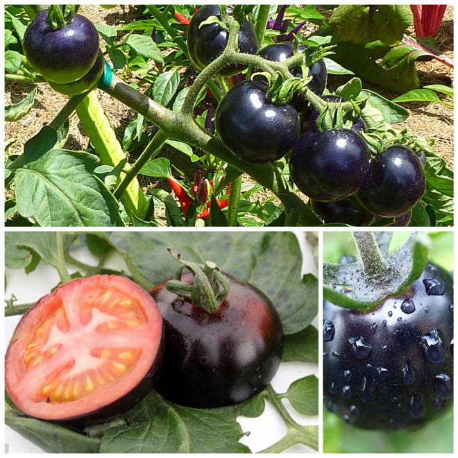 Những loại trái cây bất chấp mọi quy luật để tồn tại với vẻ ngoài vô cùng kỳ dị - Ảnh 5.