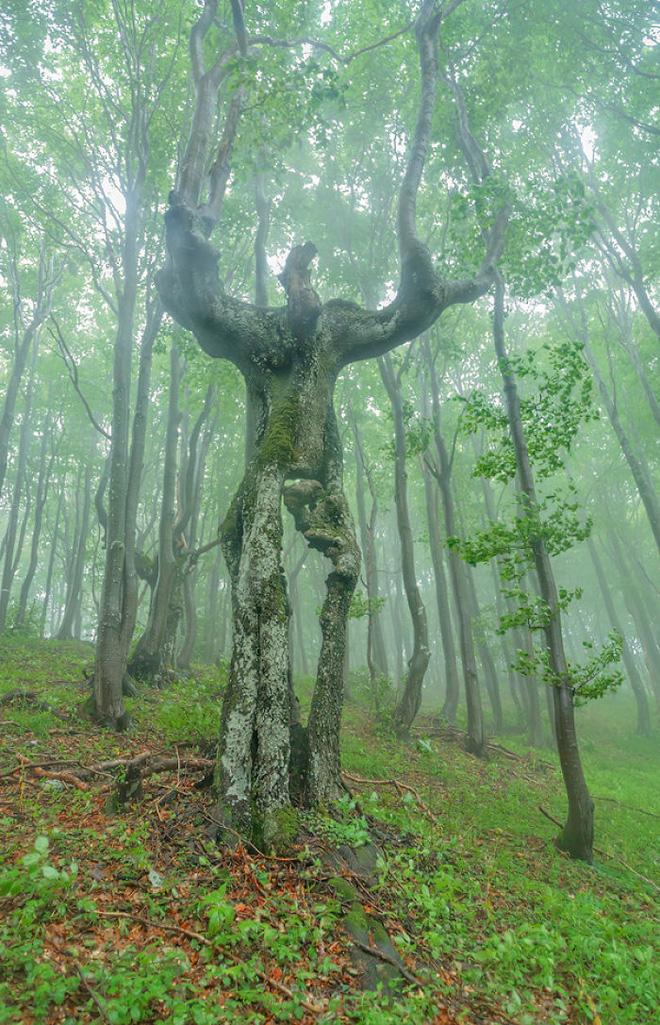 18 hình ảnh khiến bạn phải giật mình khi nhìn vào những cây cổ thụ - Ảnh 5.