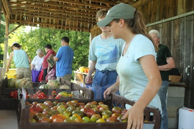 Bài 4: Trang trại cộng đồng giúp người Mỹ giải bài toán thực phẩm sạch - Ảnh 7.