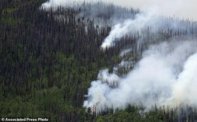 Hơn 800 triệu cây rừng ở Mỹ đột tử vì sát thủ hàng loạt nhỏ bé - Ảnh 3.