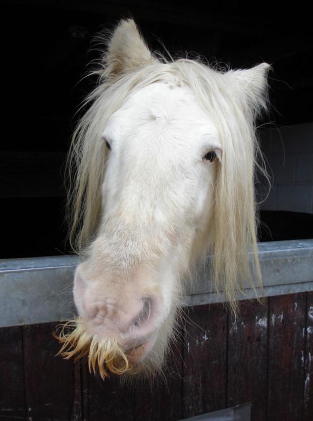 14 chú ngựa trông thật menly khi mọc râu - Ảnh 8.