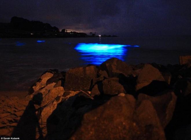Kỳ diệu vùng nước biển cứ chạm vào là phát ra ánh sáng màu xanh lam - Ảnh 6.