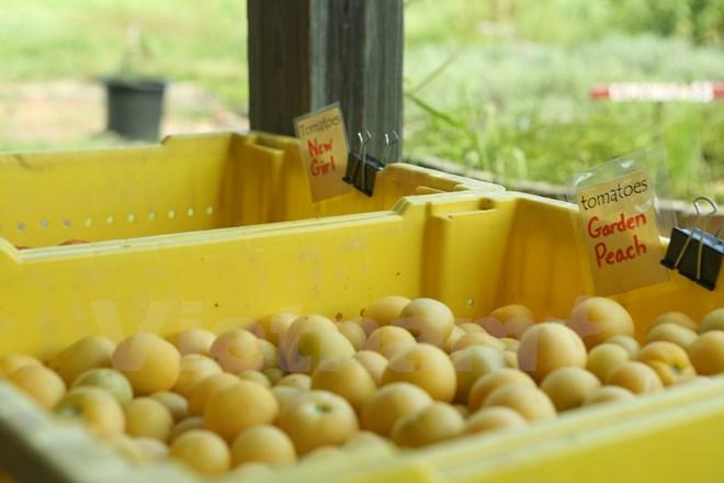 Bài 4: Trang trại cộng đồng giúp người Mỹ giải bài toán thực phẩm sạch - Ảnh 8.