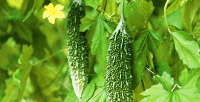7 loại cây phổ biến vừa ăn vừa có tác dụng chữa bệnh - Ảnh 7.