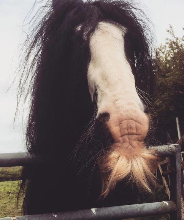14 chú ngựa trông thật menly khi mọc râu - Ảnh 9.