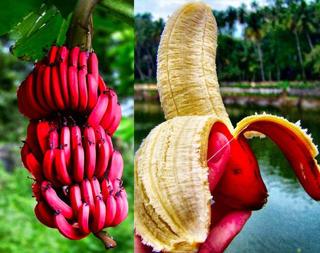 Những loại trái cây bất chấp mọi quy luật để tồn tại với vẻ ngoài vô cùng kỳ dị - Ảnh 7.
