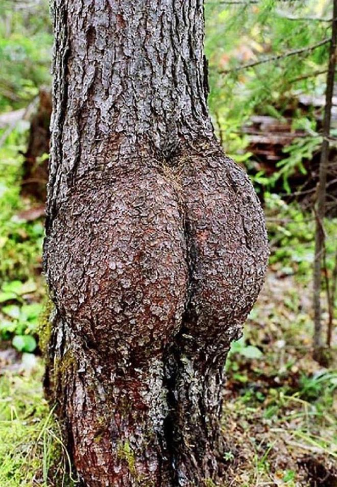 18 hình ảnh khiến bạn phải giật mình khi nhìn vào những cây cổ thụ - Ảnh 7.