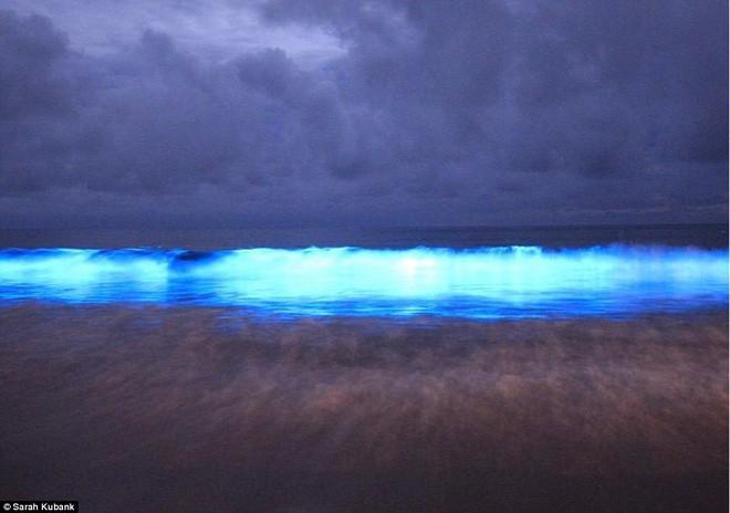 Kỳ diệu vùng nước biển cứ chạm vào là phát ra ánh sáng màu xanh lam - Ảnh 7.