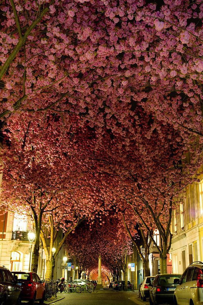 Những con đường phủ đầy hoa tươi như trong truyện cổ tích - Ảnh 7.