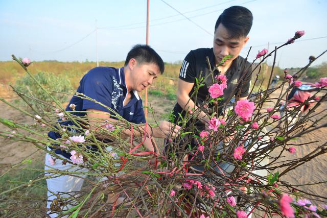 Hà Nội: Đào, quất nở sớm, nhiều người Nhật Tân lo mất Tết - Ảnh 8.