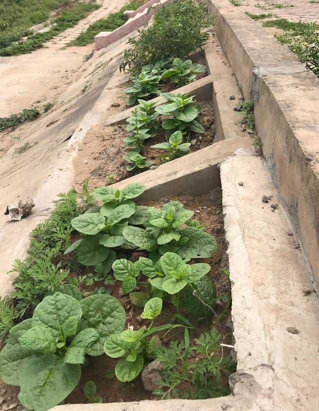 Khoét lỗ bê tông trồng rau: Hà thành sánh cùng Hà Giang - Ảnh 8.
