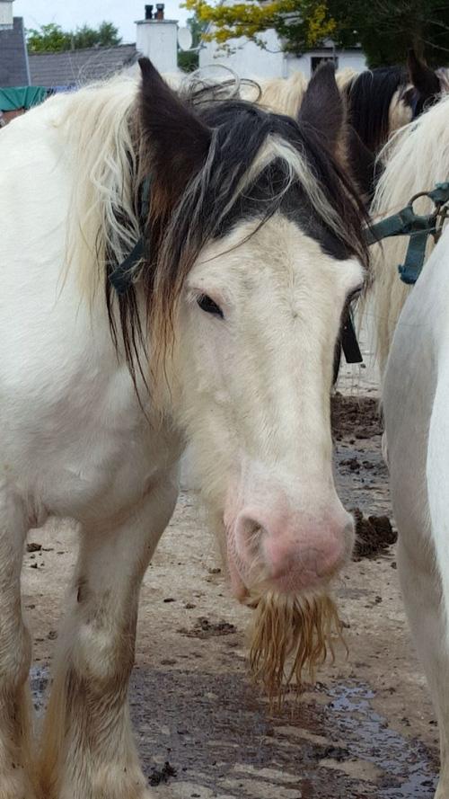 14 chú ngựa trông thật menly khi mọc râu - Ảnh 10.