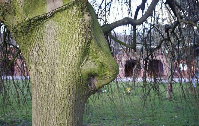 18 hình ảnh khiến bạn phải giật mình khi nhìn vào những cây cổ thụ - Ảnh 8.