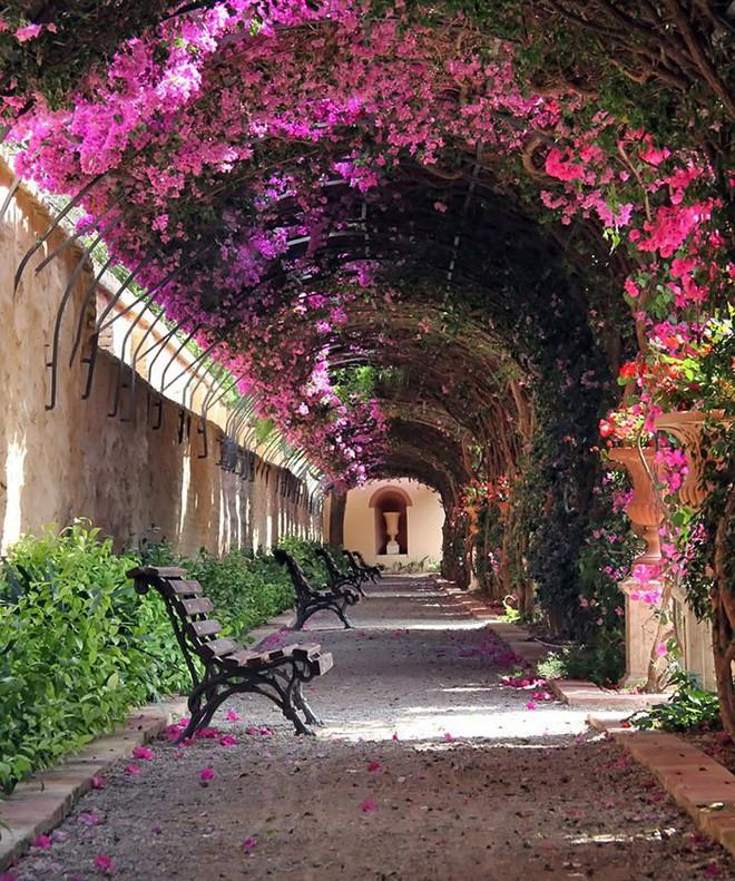 Những con đường phủ đầy hoa tươi như trong truyện cổ tích - Ảnh 8.
