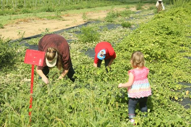 Bài 4: Trang trại cộng đồng giúp người Mỹ giải bài toán thực phẩm sạch - Ảnh 10.