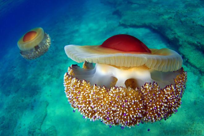 Thấy quả trứng chiên kỳ lạ trôi dưới lòng đại dương, nhiếp ảnh gia giật mình khi lại gần - Ảnh 9.