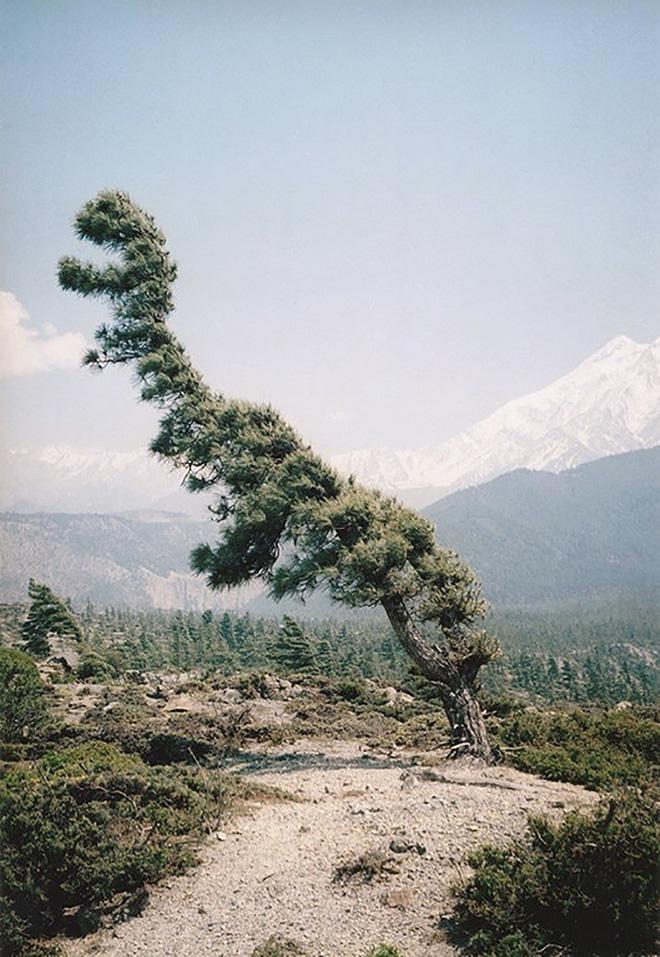 18 hình ảnh khiến bạn phải giật mình khi nhìn vào những cây cổ thụ - Ảnh 9.
