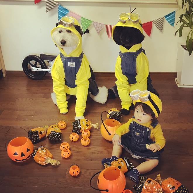 Loạt ảnh hóa trang Halloween hoành tráng nhất mạng xã hội của bé gái Nhật và những người bạn thú cưng - Ảnh 9.