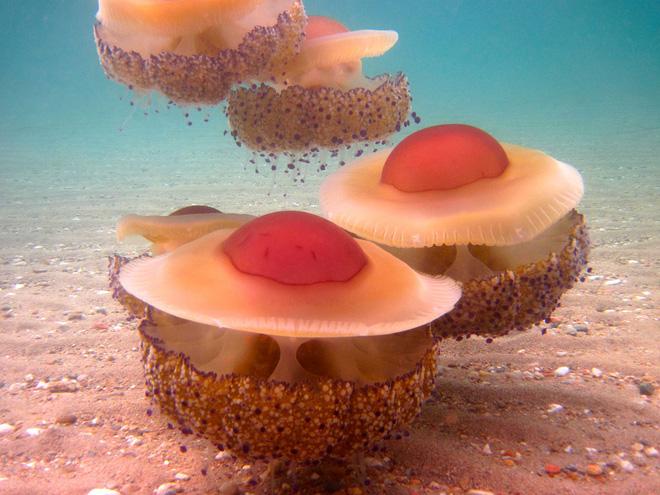 Thấy quả trứng chiên kỳ lạ trôi dưới lòng đại dương, nhiếp ảnh gia giật mình khi lại gần - Ảnh 10.