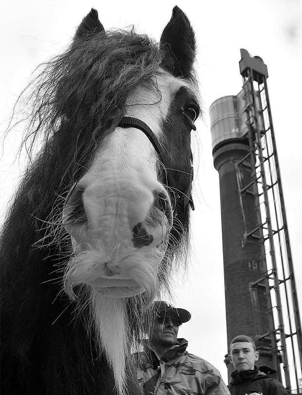 14 chú ngựa trông thật menly khi mọc râu - Ảnh 12.
