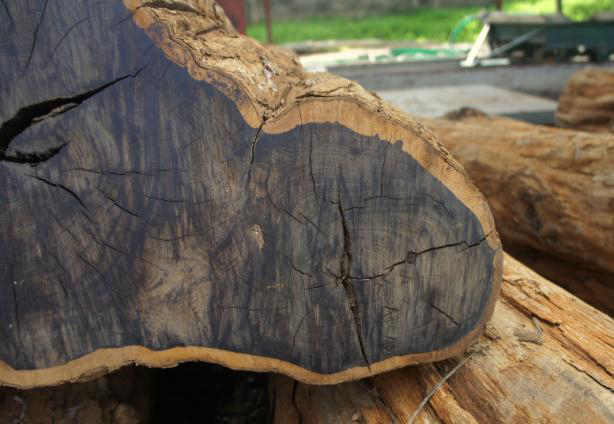 Những cây gỗ tươi quý hiếm bậc nhất thế giới, có giá trên trời mà đại gia săn lùng - Ảnh 18.