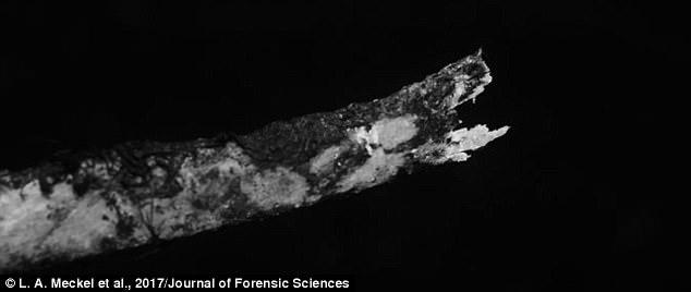 Bất ngờ phát hiện hươu ăn xác người gây hoang mang giới khoa học - Ảnh 2.