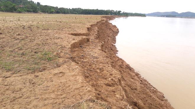 Video: Hàng trăm nghìn mét đất bị sông Lam nuốt chửng từng ngày - Ảnh 2.