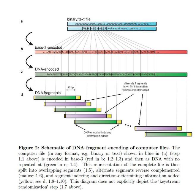 Câu đố về 1 Bitcoin ẩn chứa trong một sợi ADN sau gần 3 năm đã có lời giải - Ảnh 2.